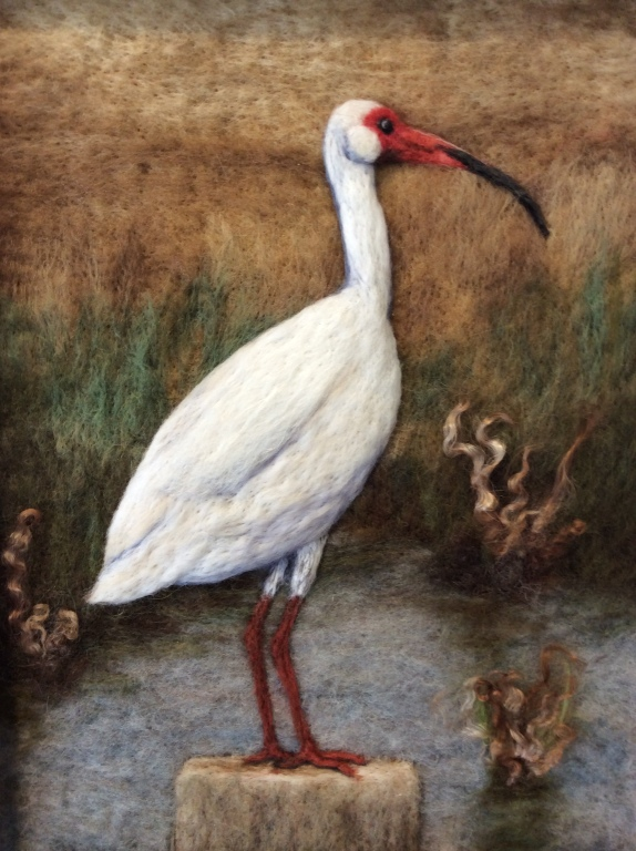 Ibis in Winter